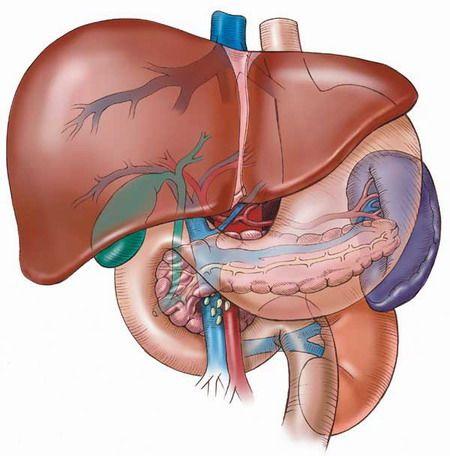 Лікування печінки і жовчного міхура