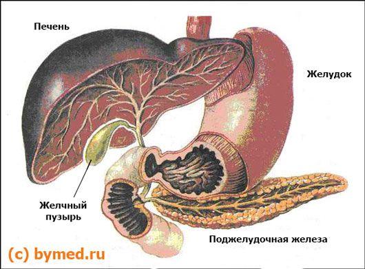 Печінка і підшлункова залоза